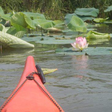 Canoa- Kayakando: Notturna sul Mincio