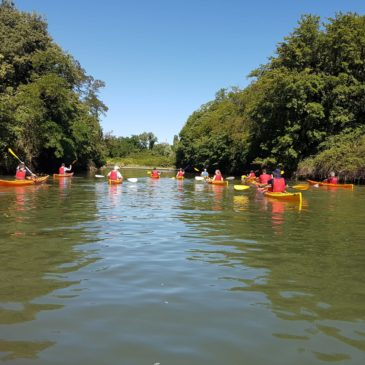 Canoa-kayak: Corsi di Kayak per adulti